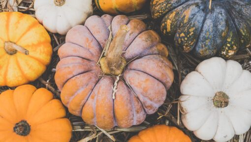 Pick your own pumpkins in Kent