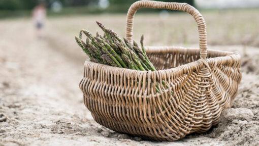 pyo asparagus kent