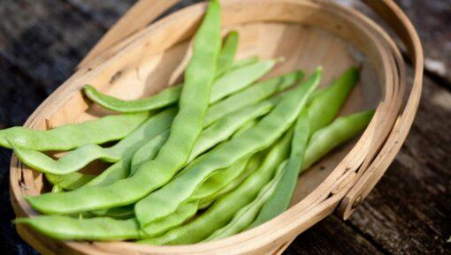 pyo runner beans kent