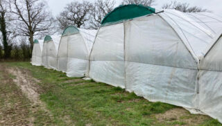 strawberry poly tunnel