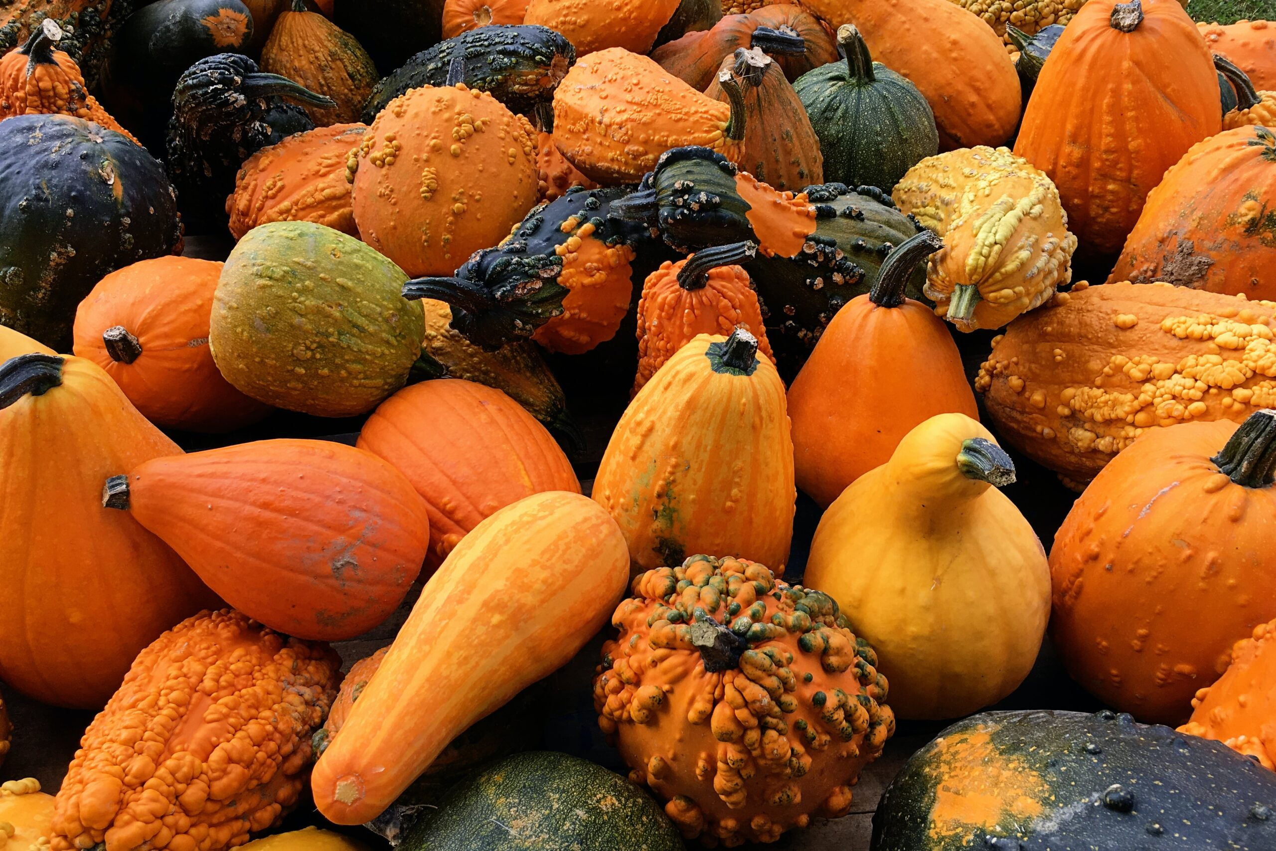 pyo pumpkins kent